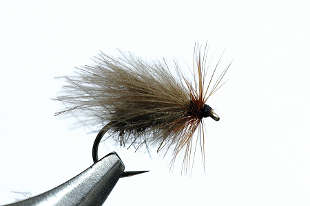 Sedge CDC.